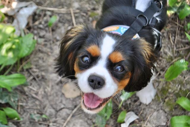 犬がピレスリン、ピレスロイド中毒を起こした時の治療