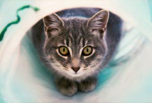 猫がエチレングリコールを食べた時の対処