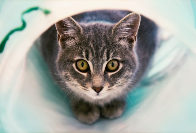 猫がニラを食べてしまった時に起こる病態