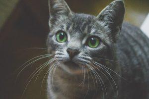 猫が有機リン(除草剤、殺虫剤)を食べた時の対処