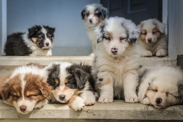 犬パルボウイルス感染の治療