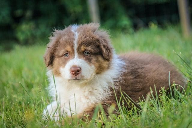 犬のニコチン中毒の予防
