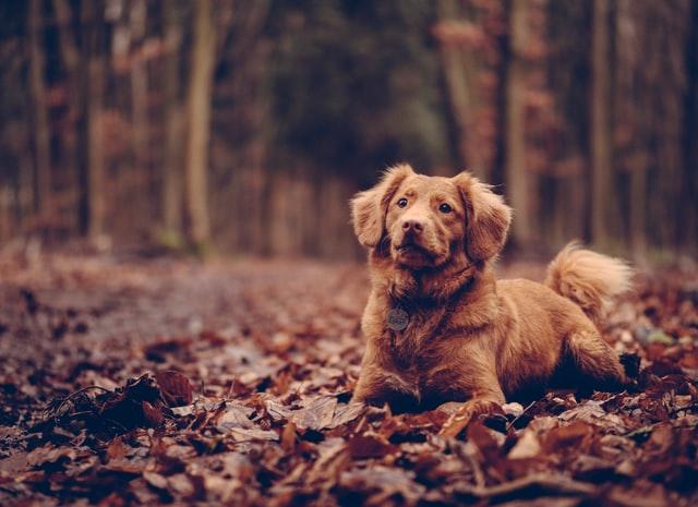 犬の甲状腺機能低下症の診断基準