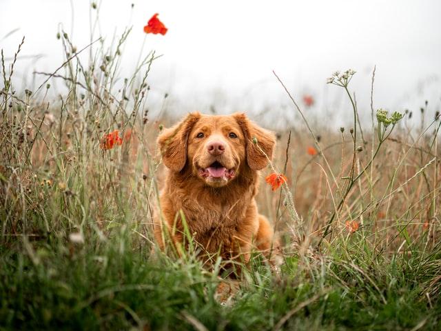 犬の甲状腺機能低下症の誤診
