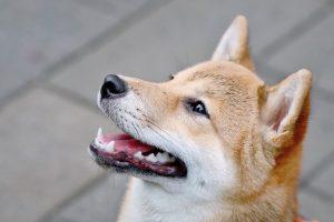 犬がネギを食べてしまった時の中毒の症状