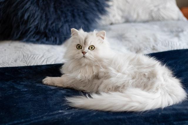 猫のアスピリン中毒の予防