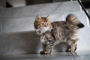 猫のホウ酸中毒の予防