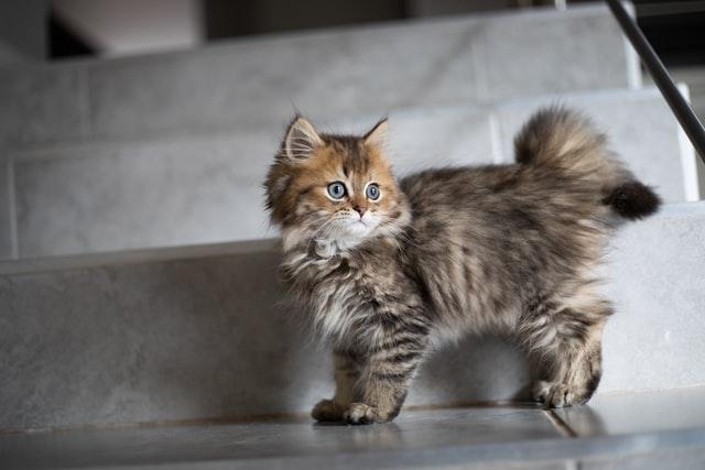 猫のカルバメート系殺虫剤中毒の予防