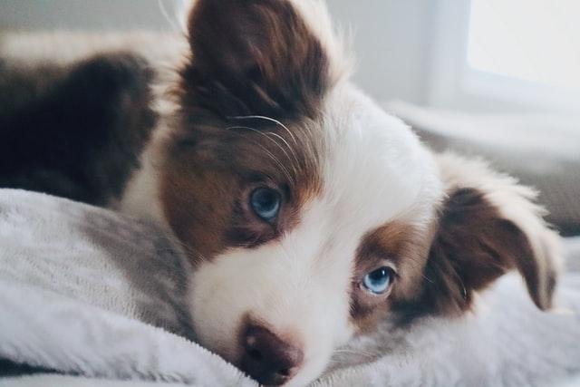 犬のカフェイン中毒の予防