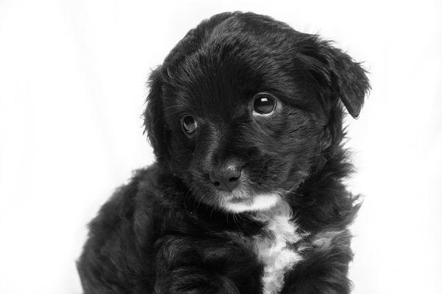 犬がロキソニンを食べてしまった時に起こる病態