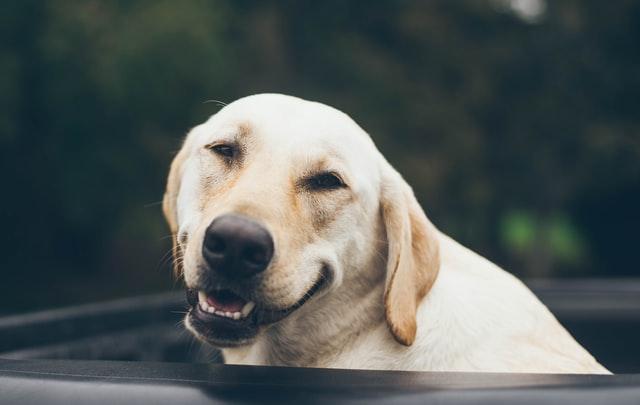 犬のコクシジウム症の感染の臨床症状