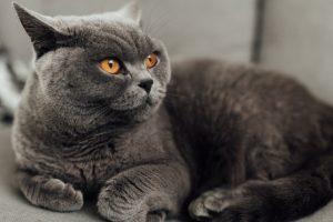 猫がニンニク中毒を起こした時の治療