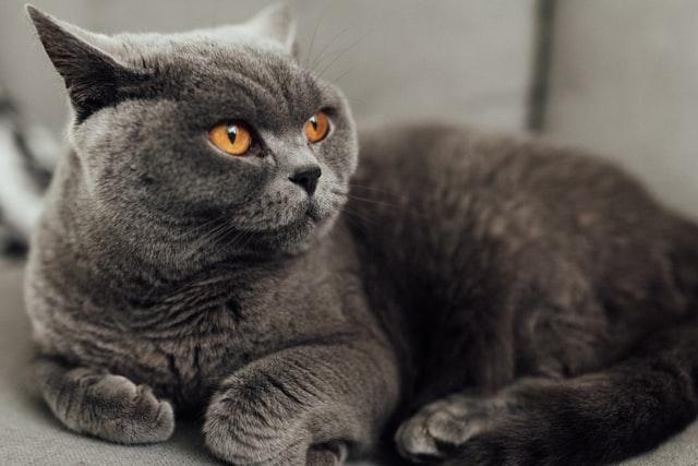 猫がアスピリン中毒を起こした時の治療
