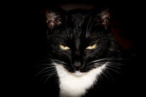 猫がメタアルデヒドを食べてしまった時の応急処置と対処法