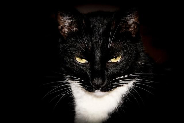猫がアスピリンを食べた時の対処