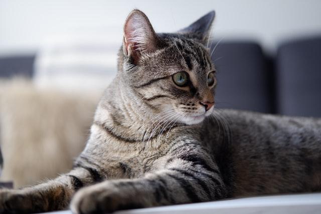 猫がカルバメート系殺虫剤を食べてしまった時の応急処置と対処法