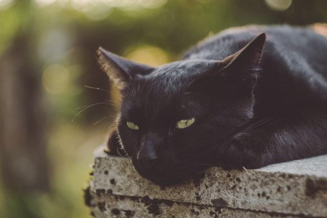 猫がアンフェタミン中毒を起こした時の予後