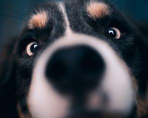 犬の玉ねぎ中毒の予防