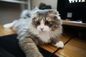 猫がキシリトール中毒を起こした時の治療