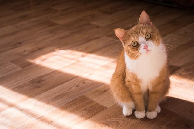 猫がイブプロフェン中毒を起こした時の予後