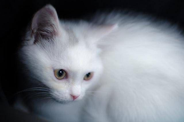 猫がカルバメート系殺虫剤中毒を起こした時の治療