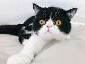 猫がキシリトールを食べてしまった時の応急処置と対処法