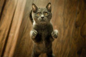 猫がホウ酸中毒を起こした時の予後