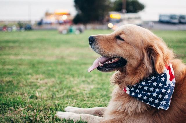 犬がメチルフェニデート中毒を起こした時の治療