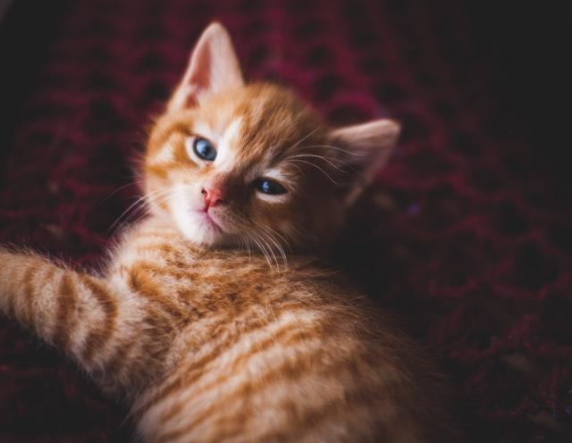 猫がアンフェタミンを食べてしまった時の応急処置と対処法