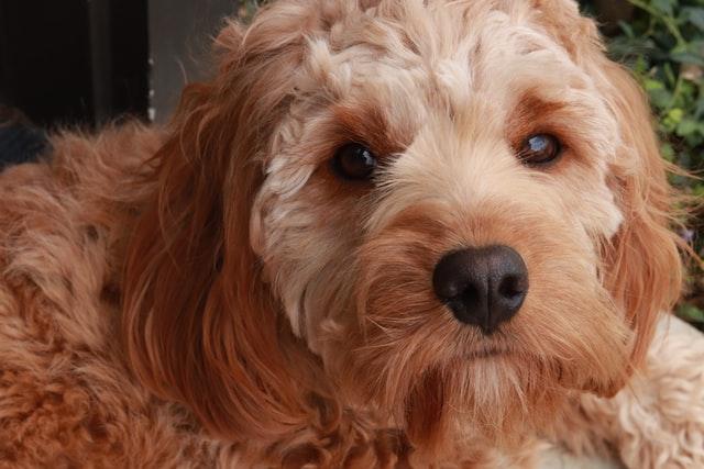 犬がニンニクを食べてしまった時に起こる病態