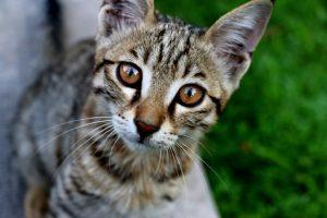 猫がメタアルデヒド中毒を起こした時の治療
