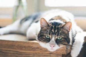猫がホウ酸を食べてしまった時の応急処置と対処法