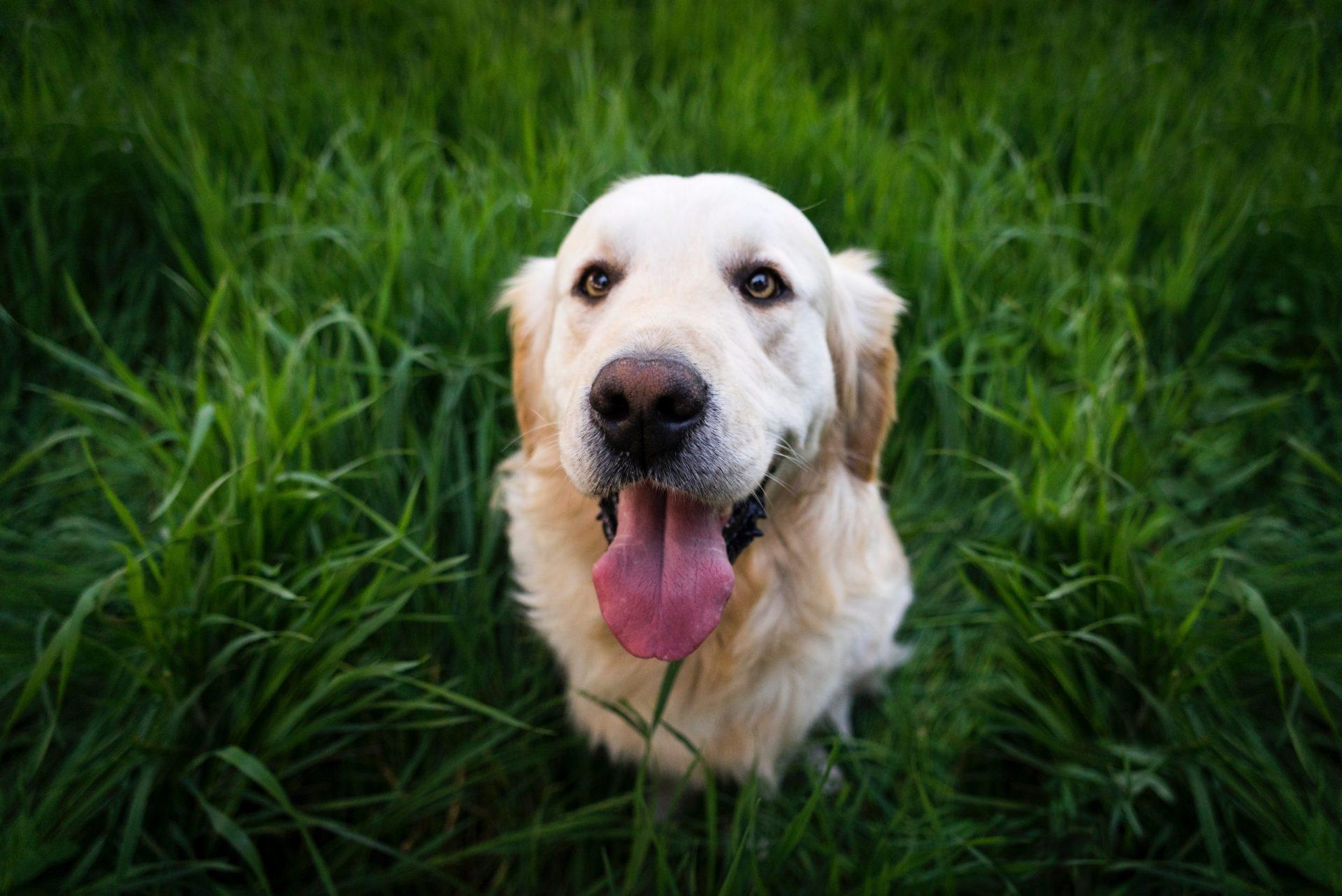 犬のジステンパーの臨床症状