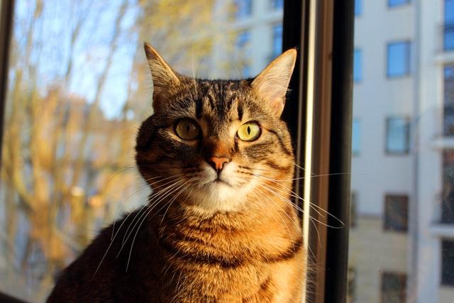 猫がイブプロフェンを食べてしまった時の応急処置と対処法