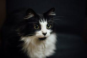猫がニンニクを食べた時の対処
