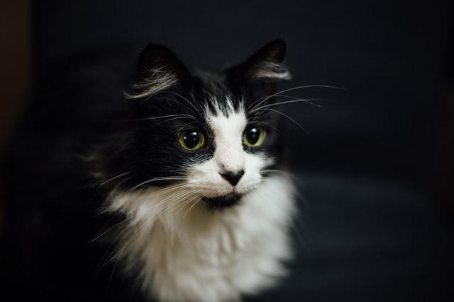 猫がメチルフェニデート中毒を起こす中毒量は