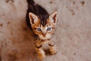 猫がメタアルデヒドを食べてしまった時の中毒量