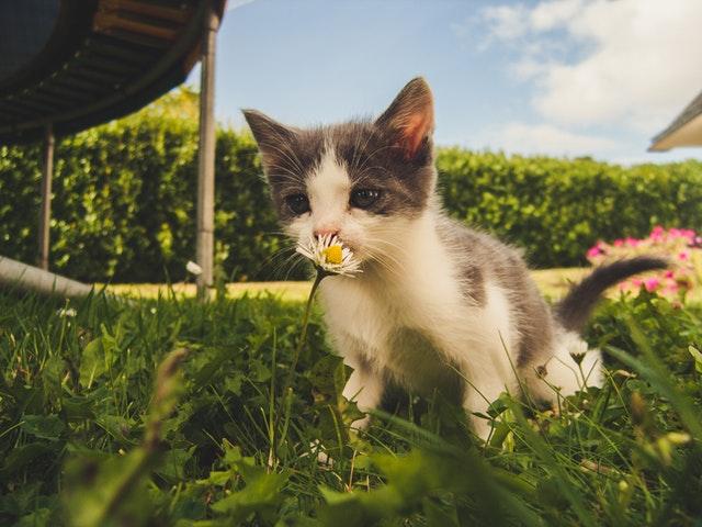 猫がユリ中毒を起こす中毒量