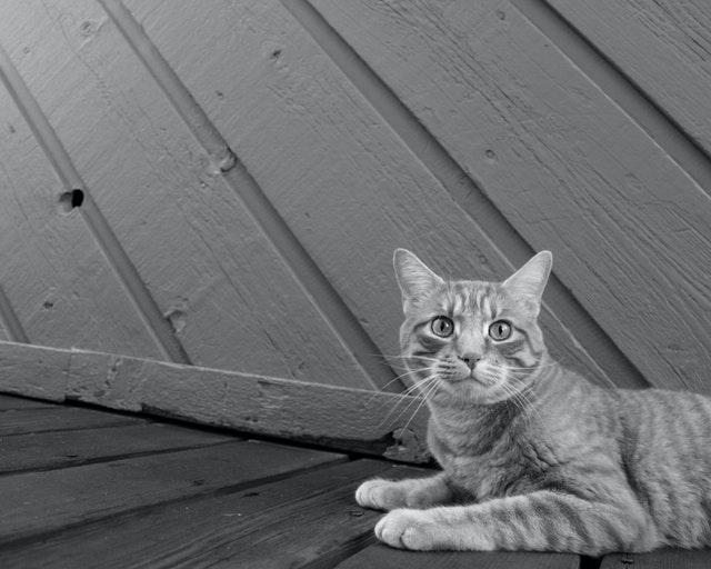 猫の皮膚糸状菌症の検査