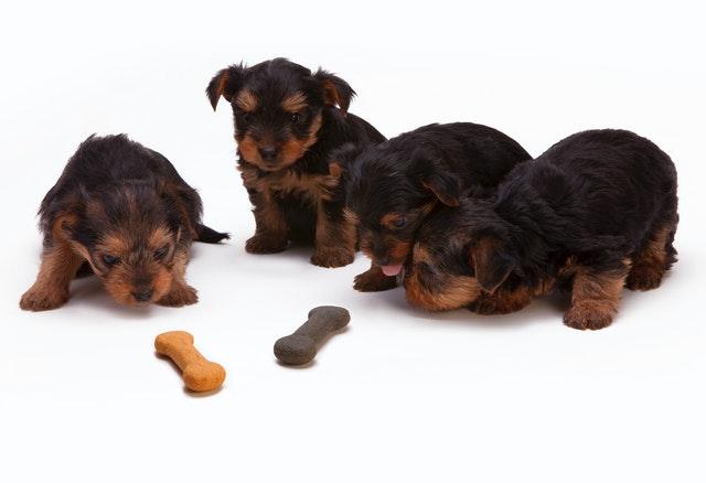 犬がユリを食べてしまった時に起こる病態