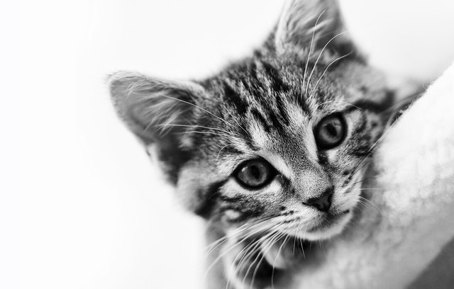 猫の鈎虫症の診断