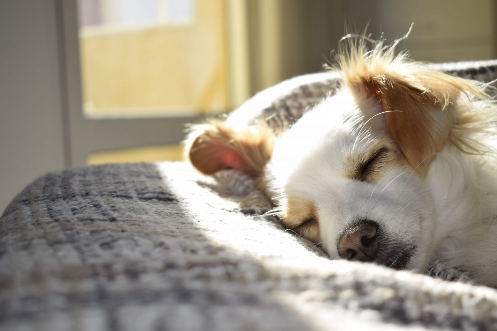 犬がユリ中毒を起こした時の治療