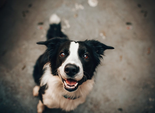 犬がぶどうを食べてしまった時の応急処置と対処法