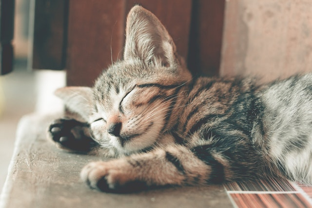 猫が玉ねぎ中毒を起こす中毒量