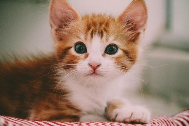 猫の嘔吐とは?