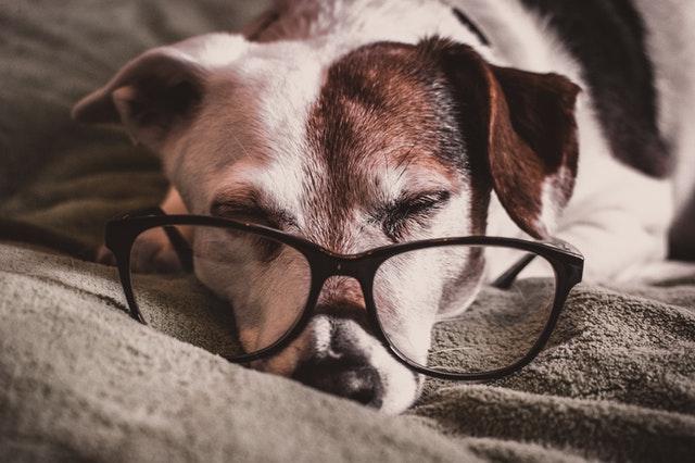 犬の瓜実条虫症の生活環