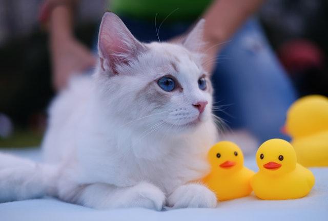 猫のヒモ状異物の危険性
