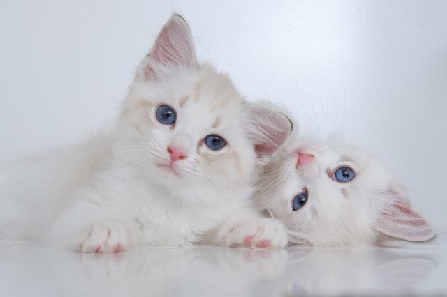 猫にとっての異物とは