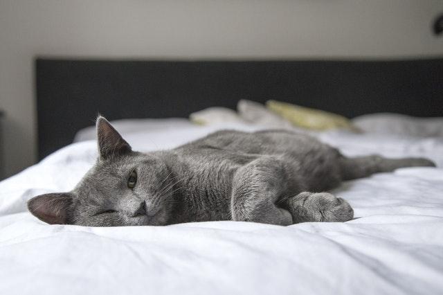 猫のチョコレート中毒の予防