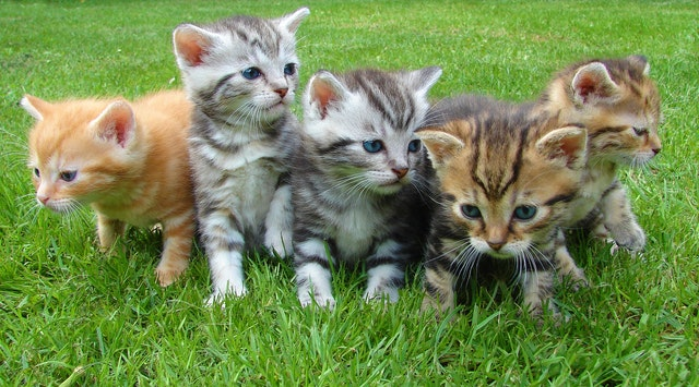 普段見ておくべき愛猫のポイント